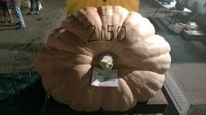 Pumpkin Festival Ohio by King Pumpkin Sets New Ohio State Record Wtrf 7 News Sports