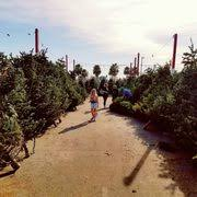 Boy Scout Christmas Tree Recycling San Diego by Bsa Troop 235 Christmas Tree Lot Christmas Trees 18921 E 17th