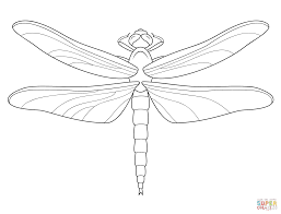 1612x1227 Brilliant Cute Animal Dragonfly Coloring Pages Pictures To Print