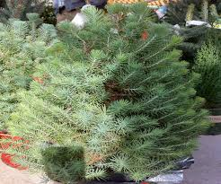 Sears Artificial Christmas Trees Unlit by Christmas Season Target Artificial Christmas Trees Season At