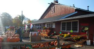 Pumpkin Picking In Ct by Photo Gallery Discover Bethel Ct