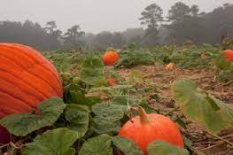West Produce Pumpkin Patch Fayetteville Nc by Gross Farms Go To The Pumpkin Patch This Fall Children