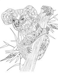 Koala Amazing Animals Colouring Pages By Joenay Inspirations