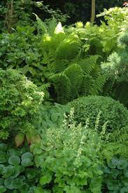 Shade Garden With Hosta Fern Ladyaposs Mantle Boxwood Wild Ginger