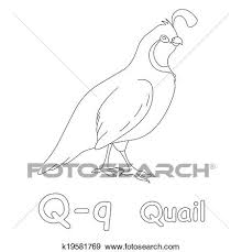 Stock Illustration Of Q For Quail Coloring Page K19581769