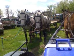 Amish Horses: Draft Horse Sale Amish Horses April 2016 For Sale Featured Listings Kalona Homes For Property Search In Single Familyacreage Sale Iowa 20173679 Tours Chamber September 2014 Ia Horse Auction Pictures Of Amana Colonies Day Trip To Girl On The Go