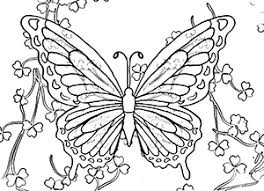 Shamrock Butterfly Coloring Page