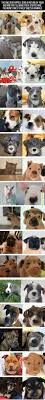Pumpkin Puree For Dog Constipation by 1898 Best Stella Bby Images On Pinterest Puppy Treats Dog