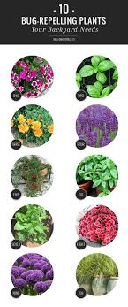 10 Bug Repelling Plants Your Backyard Needs | HelloGlow.co How To Get Rid Of Flies Outdoors Step By South Portland Backyard Latest Battleground In War Against Winter Clean Up Dog Waste From A Backyard 11 Steps The Chicken Chick Flystrike Chickens Causes Quickly And Naturally Whiteflies Identify Old Cluster Fly Facts Control Small Fly Infestation Uk How Get Rid Ants Yard Driveway Easiest Most Fun Way Fruit 25 Unique Outside Ideas On Pinterest Sliding Doors