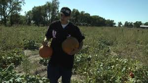 Valas Pumpkin Patch Jobs by A Visit To The Pumpkin Patch Turon Kansas Youtube