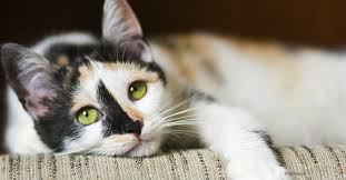 cat runny nose feline immunodeficiency fighting cat disease