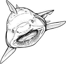 Print Whale Shark Coloring Pages To Free Home