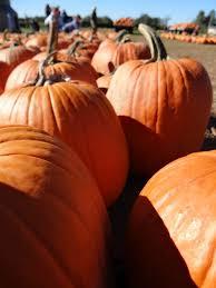 Best Pumpkin Apple Picking Long Island Ny by 746 Best East Hampton Sag Harbor Amagansett Wainscott