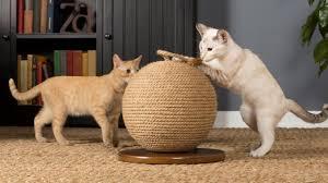 modern cat 44 cool ideas modern cat furniture