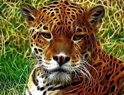 35 best Jaguar art images on Pinterest