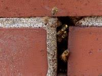 how do i get rid of a bees nest in my roof best image voixmag