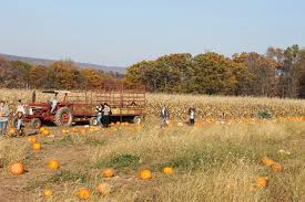 Pumpkin Picking Farms In Maryland by Corn Maze And Hay Rides Pumpkins Christopher Maylath