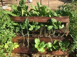 No Dig Pallet Veggie Garden