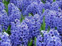 109 best wholesale flowers images on diy wedding