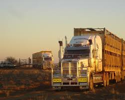 Experienced MC Livestock Truck Driver - Driver Jobs Australia Hshot Trucking Pros Cons Of The Smalltruck Niche Livestock Haulers May Receive Another Extension For Eld Rules Producers And Feedlots Are Facing A Trucker Shortage Mc Bdouble Transport Driver Jobs Australia Fleet Says It Acted Within Law In Denying Job To With Experienced Truck Fmcsa Clarifies Guidance Horse Haulers Topics Senate Passes Bill Exempting Livestock From Hinde Exports Livestock Plants Goods Ireland Uk Italy Cattle Driving Best Image Kusaboshicom Thomas Hauling Home Facebook