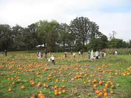 Pumpkin Patch Collins Ms by Traditions Oak Hill