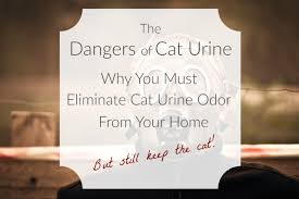 Dog Urine Hardwood Floors Stain by The Dangers Of Cat Urine Why You Must Eliminate Cat Urine Odor