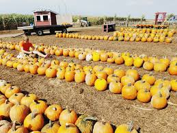 Pumpkin Patch Near Madison Wi by 10 Reasons To Visit Schuster U0027s Farm This Fall Inspo U0026 Co