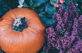 Atlanta Pumpkin Patch Corn Maze by Top 3 Pumpkin Patches Around Atlanta Ga Akins Ford