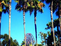 California Palm Trees Beaches