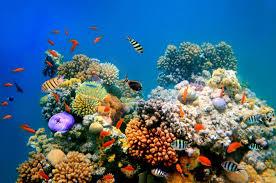 aquarium nano eau de mer les poissons eau de mer et invertébrés eau tortues reptiles et