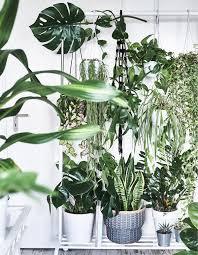 pflanzen in szene setzen frische ideen ikea deutschland