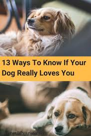 25 Ways You Know Your Dog Loves You
