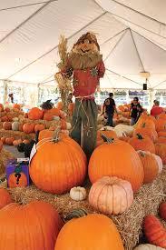 Varieties Of Pumpkins by Pumpkin Power The Collegian Highlights Some Of The Valley U0027s