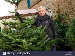 Balsam Christmas Trees Uk by Christmas Tree Farm Uk Stock Photos U0026 Christmas Tree Farm Uk Stock