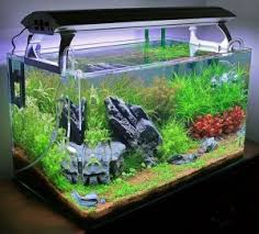 aquarium d eau douce aquariophilie convertir un aquarium d eau douce en bac récifal
