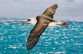 Sinking Islands Global Warming by How Climate Change Is Sinking Seabirds Audubon