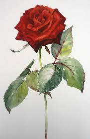 Shedding Skin Pantera Letra by 458 Best Pinturas Dibujos Flores Images On Pinterest Flowers
