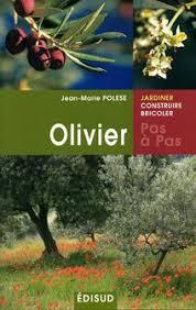 planter un olivier dans mon jardin côté maison