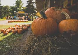 Best Pumpkin Patch Austin Texas by Where Are The Pumpkin Patches In Austin Texas