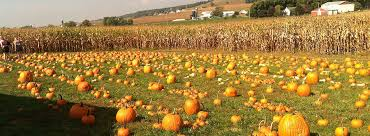 Pumpkin Picking Near Lancaster Pa by Welcome To Mast Farms Mast Farms