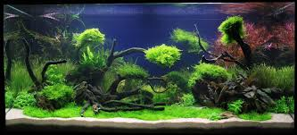 Adrie Baumann Und Das Aquascaping - Wasserpflanzen ... Home Accsories Astonishing Aquascape Designs With Aquarium Minimalist Aquascaping Archive Page 4 Reef Central Online Aquatic Eden Blog Any Aquascape Ideas For My New 55g 2reef Saltwater And A Moss Experiment Design Timelapse Youtube Gallery Tropical Fish And Appartment Marine Ideas Luxury 31 Upgraded 10g To A 20g Last Night Aquariums Best 25 On Pinterest Cuisine Top About Gallon Tank On Goldfish 160 Best Fish Tank Images Tanks Fishing