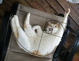 cats on deck furbonacci sequence proving that cats are purrfect 20 pics