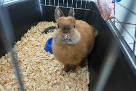 composting rabbit litter thriftyfun