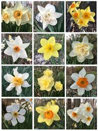 woodland inspiration for planting daffodils thinking outside the