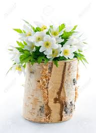 Bouquet Of White Spring Flowers Wood Anemones In A Rustic Wooden Birch Tree Vase