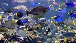 aquarium poisson pour pc les meilleurs poissons pour d buter