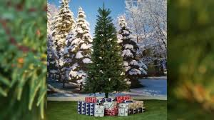 Dunhill Fir Christmas Trees by National Tree Tiffany Fir Slim Youtube