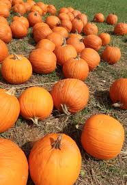 Flower Mound Pumpkin Patch Groupon by Fall Fun At Oakes Farm In Corryton Tn Brownie Bites Blog