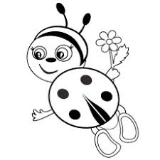 Cute And Lovely Insect Ladybug