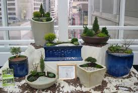 Osh Potted Christmas Trees by Miniature The Mini Garden Guru From Twogreenthumbs Com